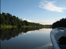 Early morning wildlife observation cruise can turn up multiple wildlife sightings, especially Proboscis Monkey and Hornbills, and the illusive White Crocodile