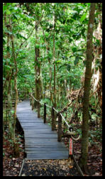 TREC Boardwalks provide access to the fascinating Fresh Water Swamp Forests and minimise our footprint on these unique and vulnerable forest habitats