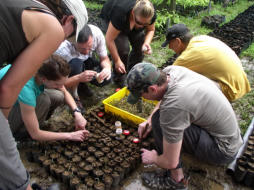 Volunteers working at the MESCOT Nursery transplanting the germinated seedlings into planting bags