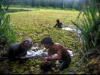 MESCOT team members working in crocodile infested waters to remove Salvinia during their pilot project