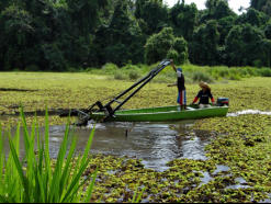 Each month the salvinia is dragged in large nets to a site where it can be netted and dumped at the forest composting sites